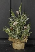 ISB63125 - 12in Snowy Herb Pine Tree-6/36pcs